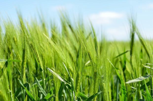 Crops pixabay