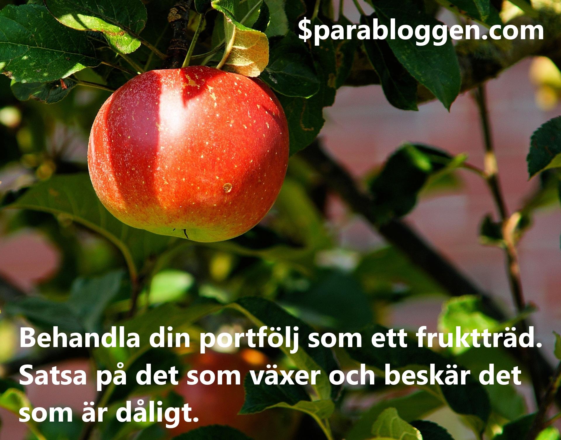 Fruktträd portfölj.jpeg