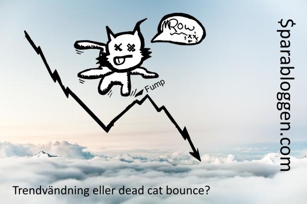 trend-dead-cat